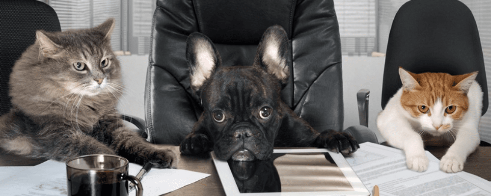 sales dogs and sales cats